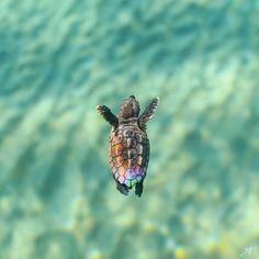 Nuoto in un mare perfetto