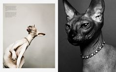 5/7 Photographer Daniel Gieseke shows a jewellery series with sphynx cats. Location in Hannover