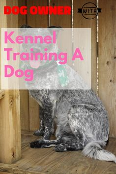 Basic Kennel Training A Dog Advice For The Newcomer >>> Learn more by visiting the image link. Kennel Training A Dog, Crate Training, Dog Training Tips, Stress And Anxiety, Dog Owners, Have Fun, Image Link, Just For You, Advice