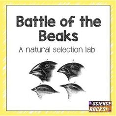 9 best heredity images on pinterest life science physical science battle of the beaks a natural selection activity fandeluxe Images