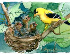 ACEO Limited Edition 5/10 - Goldfinch and Her Nest, in watercolor
