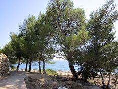 Mindfulnessretreat i Kroatien   17. - 24. oktober 2015 - EARLYBIRD TILBUD: SPAR 1000,00 kr.  Mellem oliventræer og helt ned til det azurblå Adriaterhav på øen Hvar, skal vi på dette retreat nyde nærværet og nu'et. Stedet er en fantastisk ramme, der understøtter mindfulness'ens positive virkning på både krop og sjæl.