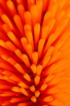 orange.quenalbertini: In orange color