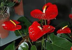 Картинки по запросу цветы опасные для жизни