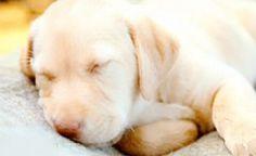 FilomenaFortes — Sleep Well 😊😘  —————————-  #cutepuppy #sleepy...