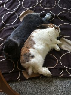 Bunnies Snuggle Face-to-Face and Side-by-Side 2