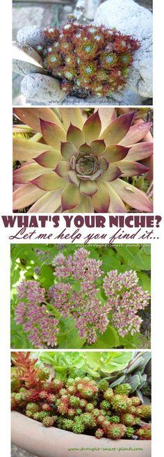 Start your own succulent plant business - let me help you find your niche... Succulents | Fairy Gardens | Succulent Crafts