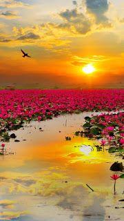 HD Exclusive Wallpaper Hd 1080p 3d Nature - india's wallpaper