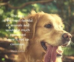 The dog is the most faithful of animals and would be much esteemed were it not so common. Martin Luther.