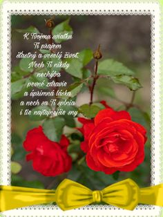 December, Rose, Happy, Flowers, Plants, Pink, Ser Feliz, Plant, Roses