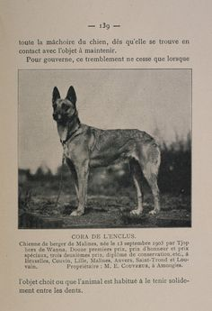 1903 Photo Of A Malinois, Bk 2 Photo:  This Photo was uploaded by billh96007. Find other 1903 Photo Of A Malinois, Bk 2 pictures and photos or upload you...