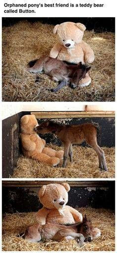 Things that make you go AWW! Like puppies, bunnies, babies, and so on. A place for really cute pictures and videos! Cute Baby Animals, Animals And Pets, Funny Animals, Wild Animals, Beautiful Horses, Animals Beautiful, Animal Pictures, Cute Pictures, School Pictures