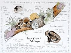 Middlewood Journal: Lichen and Jelly Fungus very nice journal page