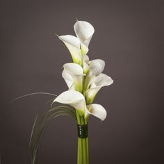 Our new New Dawn arrangement of classic calla lilies make a simple yet elegant floral display in any vase.