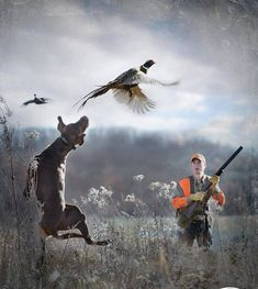 The German Shorthaired Pointer (GSP) was bred at the turn of the nineteenth century in Germany with the end goal of hunting. Pheasant Hunting, Duck Hunting, Hunting Dogs, Hunting Vest, Archery Hunting, Grouse Hunting, Weimaraner, Vizsla, German Shorthaired Pointer