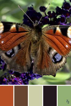 ZJ Colour Palette 440 #colourpalette #colourinspiration