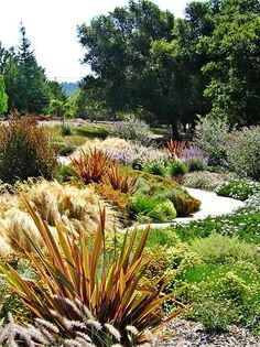 Nz Native Garden New Zealand _ Nz Native Garden - Modern Coastal Gardens, Small Gardens, Outdoor Gardens, Tropical Gardens, Rustic Gardens, Home Garden Design, Garden Landscape Design, New Zealand Flax, Drought Tolerant Landscape