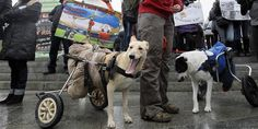 Disabled dogs relax during a protest march in defense of homeless animals in Kiev, Ukraine (© Sergey Dolzhenko/EPA/Corbis)