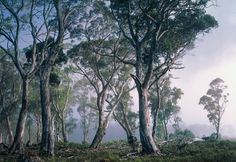 Wall Mural Fantasy Forrest (source Vision) Wallpaper Australia / The Ivory Tower