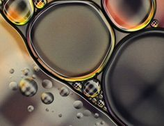 Macro photography by Mandy Brown