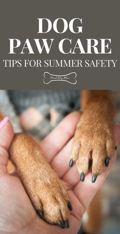 Dog Paw Care: Tips For Summer Safety | Dog Care Tips | Dog Health | Dog Paws |