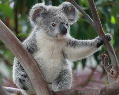 Makeup and animals Scary Animals, Cute Funny Animals, Cute Baby Animals, Animals And Pets, Animal Babies, Wild Animals, Baby Otters, Baby Koala, Australia Animals