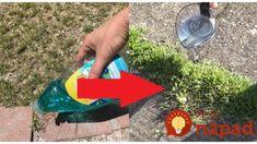 Záhradník poradil jednoduchý trik, ako rýchlo, lacno a efektívne odstrániť burinu: Postreky z obchodu už nepotrebujem! Picnic Blanket, Outdoor Blanket, Vodka, Liquor, Picnic Quilt