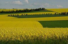 Gelb-gruen und etwas blau, sind momentan die beherrschenden Farben im Saarland, Germany.