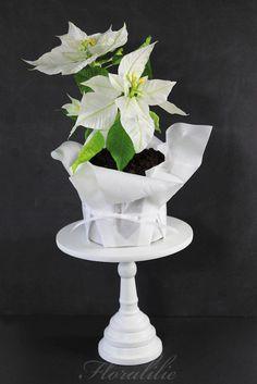 White Poinsettia Cake 2016 | Floralilie Sugar Art