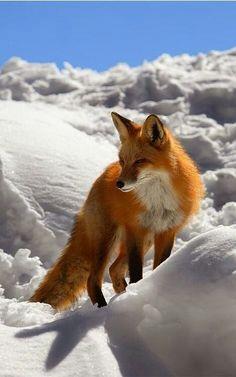 Foxyyyy