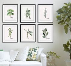 Herb print set of 6 - 8x10 Watercolor Prints, from the Original Herb Watercolors, Kitchen Decor, Green Herbs on Etsy, $95.00
