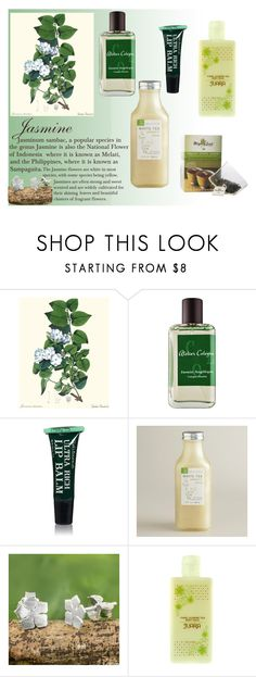 """""""Jasmines"""" by princeofpizza ❤ liked on Polyvore featuring beauty, Atelier Cologne, Clark's Botanicals, Cost Plus World Market, NOVICA, Juara, Flowers and jasmine"""
