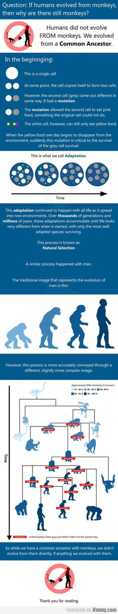 If Humans Evolved From Monkeys