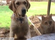 Trying to steal food from the dog | Gif Finder – Find and Share funny animated gifs