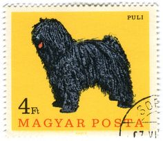 Magyar Posta. A Hungarian Puli! On a postage stamp! OMG OMG OMG. Maybe one day I will own a dog like this *crosses fingers and hopes the dog breeder gives her a discount*
