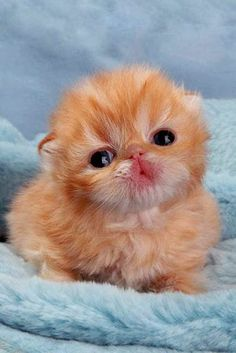 6 Adorable kittens every cat lover must see
