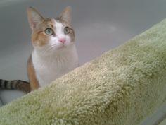So innocent. #PicklestheDrummer #Cats #CuteAnimals #Pets #kitten #cutepets