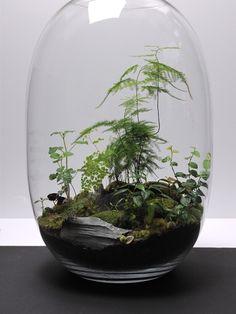 serre d 39 int rieur terrarium mini jardin projet essayer pinterest d co minis et terrarium. Black Bedroom Furniture Sets. Home Design Ideas
