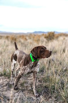 i spy....a birdie I don't care what Brad thinks or says. I will own another german short haired pointer. Best dogs to grow up surrounded by.