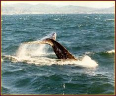 Whale watching at Depoe Bay! Tradewinds Charters.