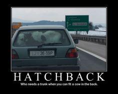 Stupid Humor | car-joke-funny-humor-hatchback-cow-golf-trunk [ Hatchback ]