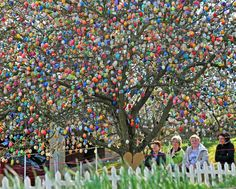 10,000 colorful eggs decorate an apple tree in the eastern German city of Saalfeld. Each year, Volker Kraft painstakingly hangs the eggs in the runup to Easter as part of what has become a local tourist attraction.