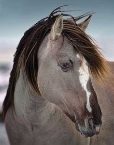 I love the long-maned horses. We share with you amazing horse pictures in this…