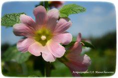 simmetrija-cvetka-stroenie-lepestkov-magija-biologii