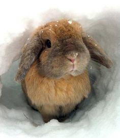 Be Yourself Every Day: Let it snow! Dieren in de sneeuw