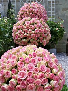 i love the compact roses to create round arrangements. These flowers are awesome.