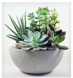 Scoutmob Shoppe - Concrete Bowl - Light succulent planter - could be fun in the middle of the table. Succulents In Containers, Cacti And Succulents, Planting Succulents, Planting Flowers, Succulent Planters, Diy Planters, Succulent Ideas, Growing Succulents, Succulent Care