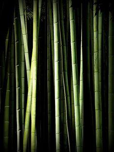Bamboo Grove (by Matsuura) #green #black