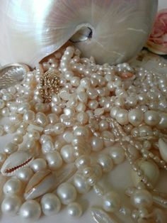 ❥ nautilus and pearls