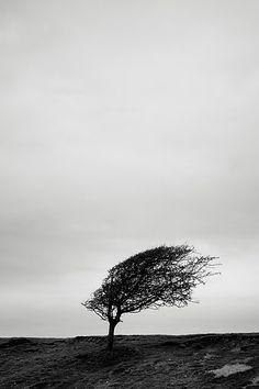 Windswept www.murphyz.co.uk